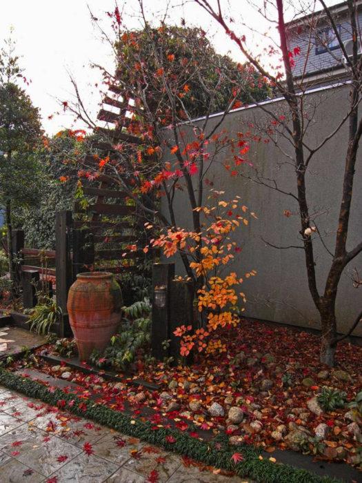 落葉樹が秋には紅葉して季節を感じさせてくれますが、落ちた葉も美しいです。